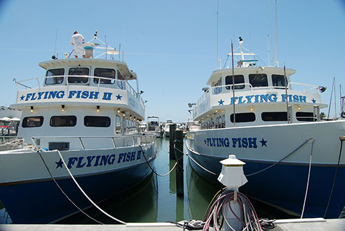 Marina docking information for Flying fish fleet